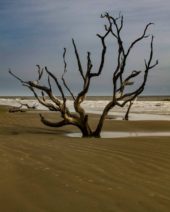 Bulls Island located in Awendaw, South Carolina. This is a nature preserve island off the coast. Such a wonderful place to walk around and see what you come across. It is a must see place in the Charleston area.