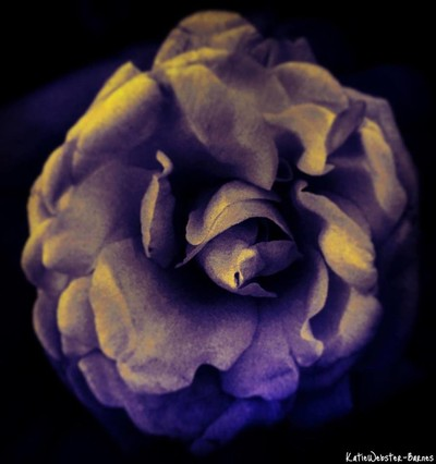 Rose in warm lighting