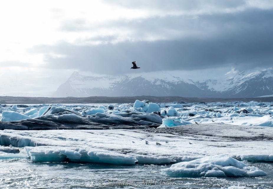 Sea birds resting on the broken up ice at the Jökulsárlón Glacier Lagoon, Iceland.