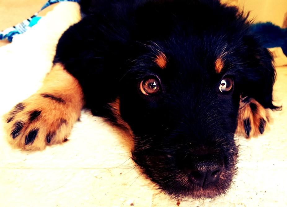 Flat Bruno