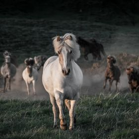Shot in Iceland, near where I grew up. Bright summer night, horses run free, it's freedom.