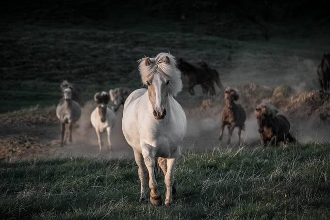 Freedom by Iceland - Wildlife Photo Contest 2017