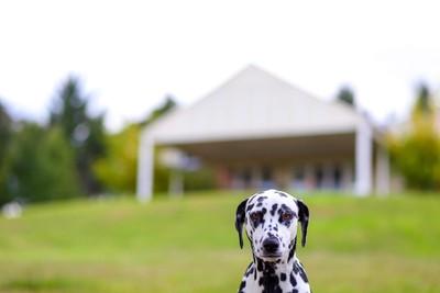 Wiggley Bottom Farm House Dog