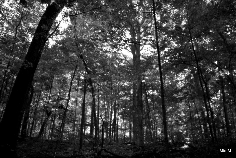fall in the woods stripped of it's colors, peace and quite moment