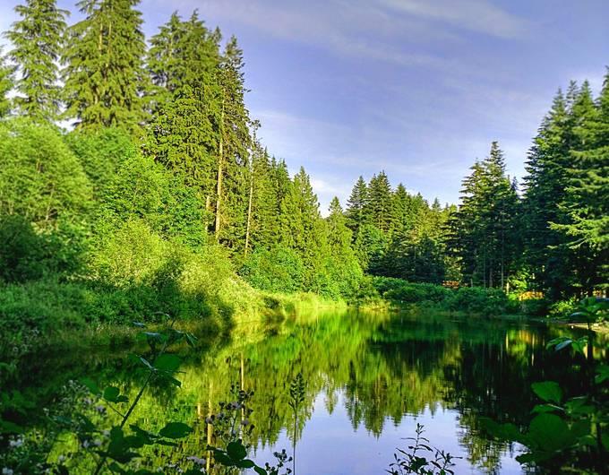 Blackberry Pond