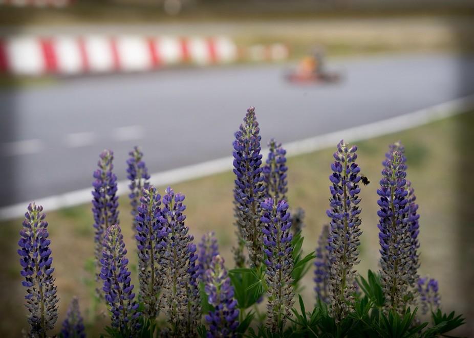 Karting-Bee