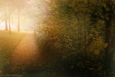 The Misty Path
