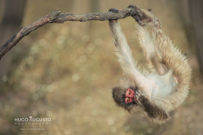 HAVING FUN! by HugoAugusto - Happening At The Zoo Photo Contest