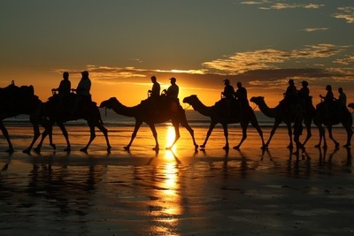sunset camel ride on Cable Beach