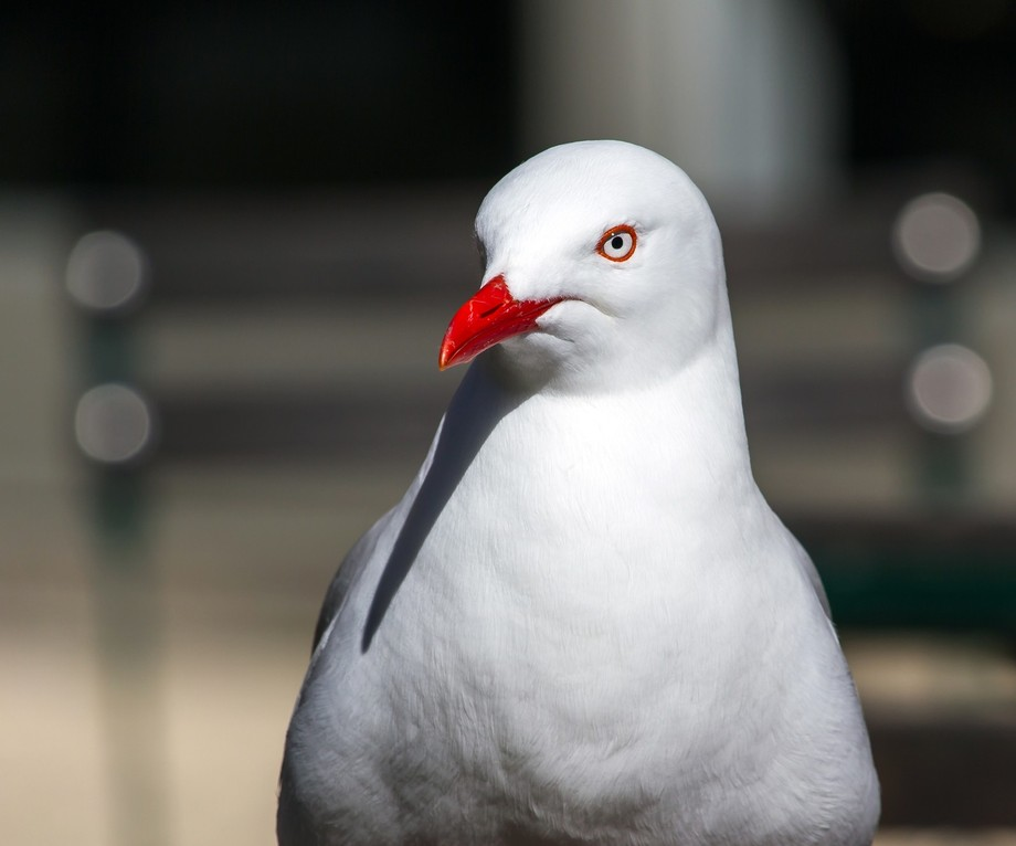 Well, it's a seagull...