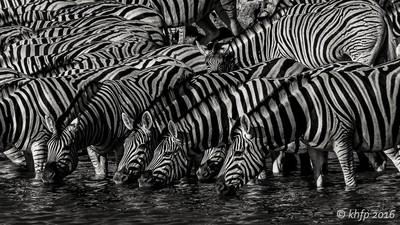 Zebras @ Okaukuejo