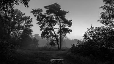 Misty Twilight Silhouette Trees (B&W)