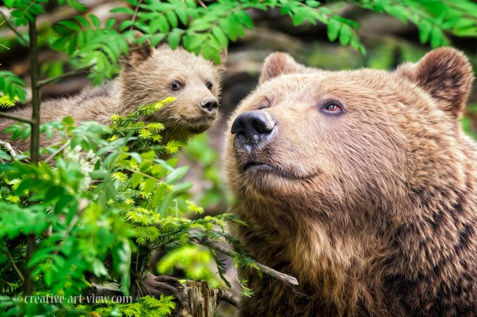 thoughful by CreativeArtView - Big Mammals Photo Contest
