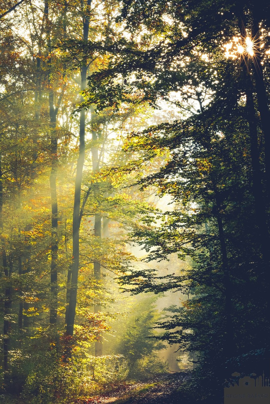Every season I take pictures in the beech forest in my hometown-the first light is the best-this shot was in autumn