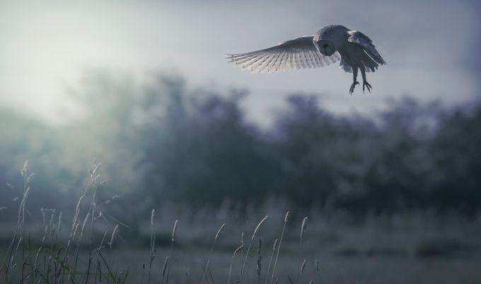 Barn Owl Blues..... by wayneaspley - World Photography Day Photo Contest 2018