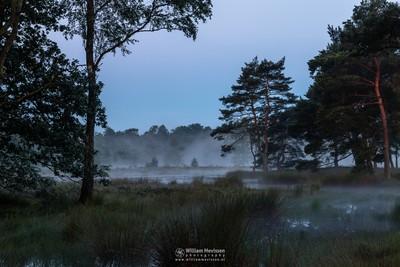 Misty Morning Ravenvennen