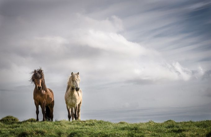 Surveying their domain. by jayneryan - Iceland The Beautiful Photo Contest