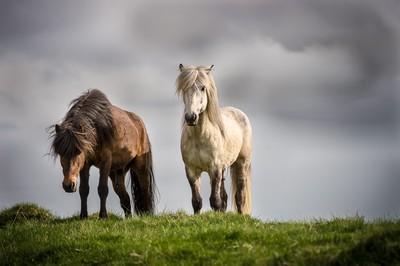 Guardians of th Herd.