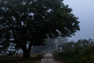 Misty Cabin