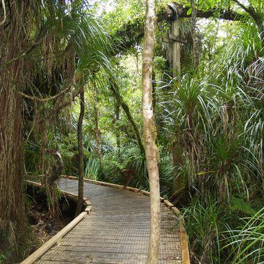 New Zealand North Island Board Walk