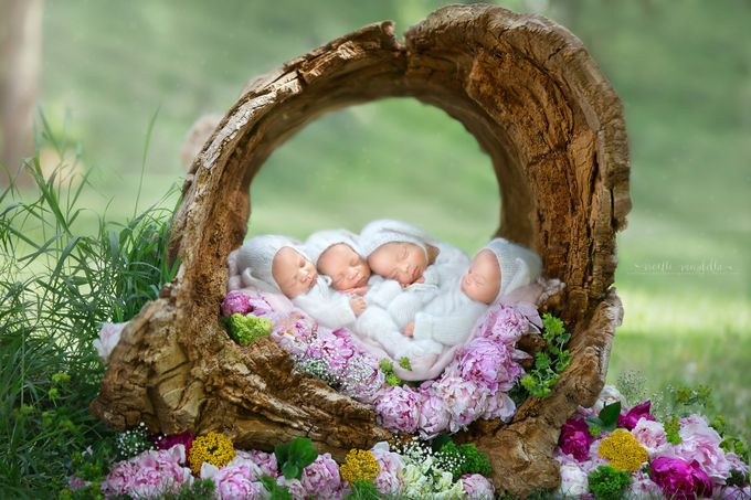 Four Bunnies in a Log by NoelleMirabella - Composing With Circles Photo Contest