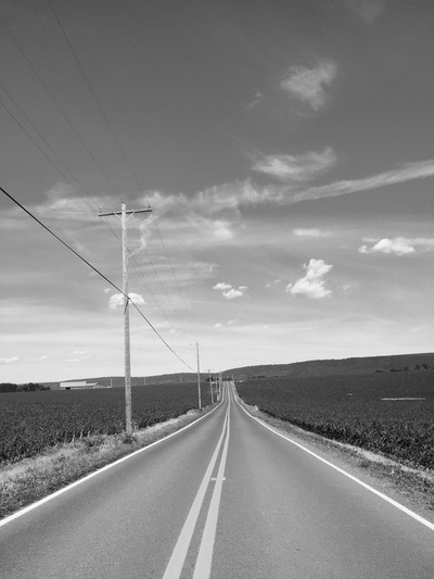 Empty Country Road Splits the Cornfield