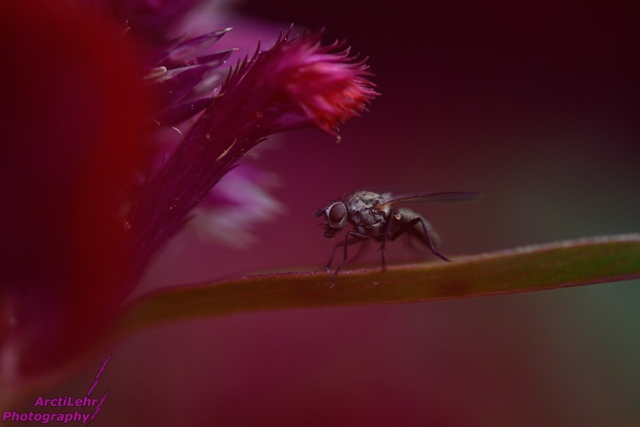 A fly on a pink, coral-looking plant. I love the feel of this photo, it's one of my pers...