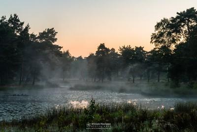 Misty View Ravenvennen