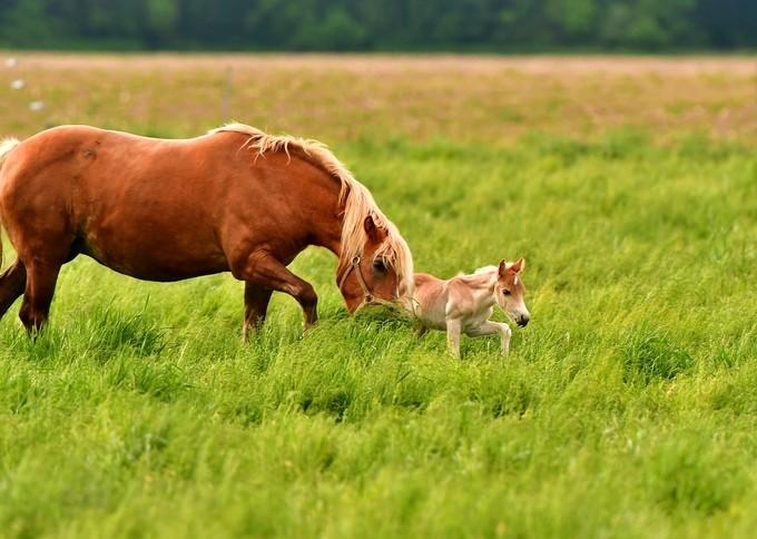 Evening Stroll Through The Long Grass by Adam_Triska - Farms And Barns Animals Photo Contest