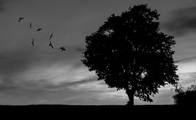Silhouette by kamyarbaghvand - Silhouettes Of Trees Photo Contest