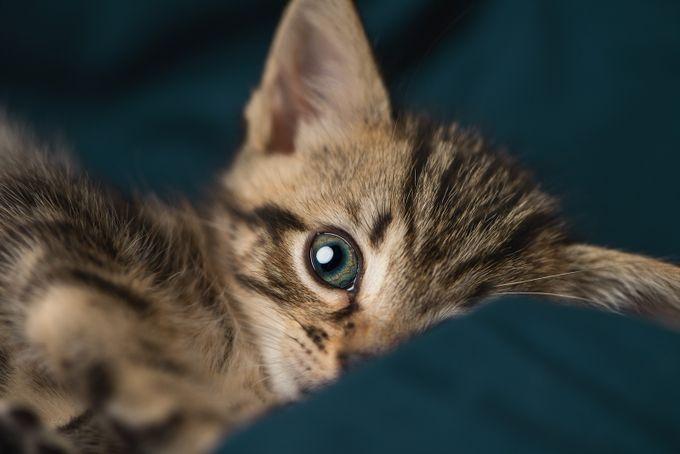 Magnolia by liliumVA - Cute Kittens Photo Contest