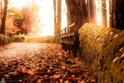 Along the Autumn trail