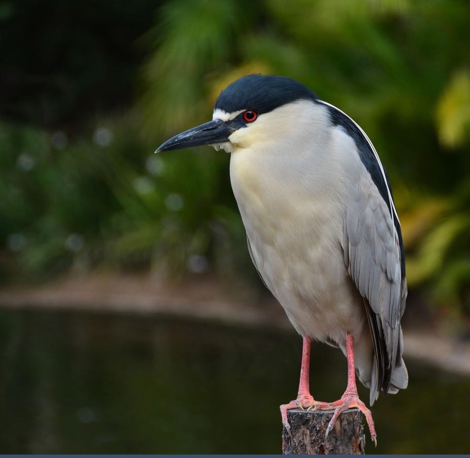 Bird San Diego