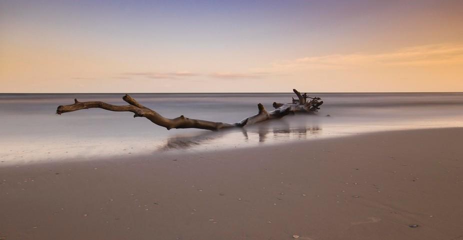 Driftwood on Matagorda beach at sunset.