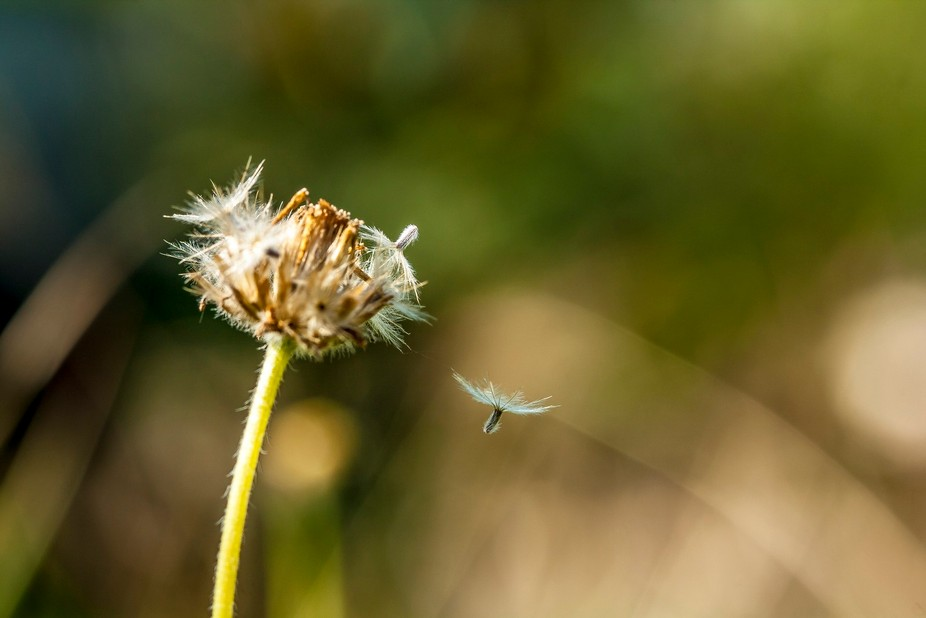 On an early morning while searching some bees and butterflies to shoot in our backyard, I found t...