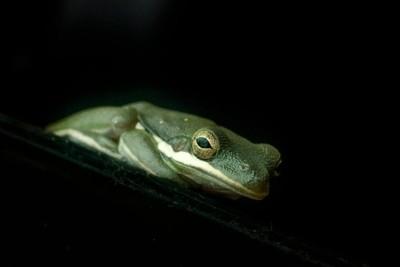 Froggy pose