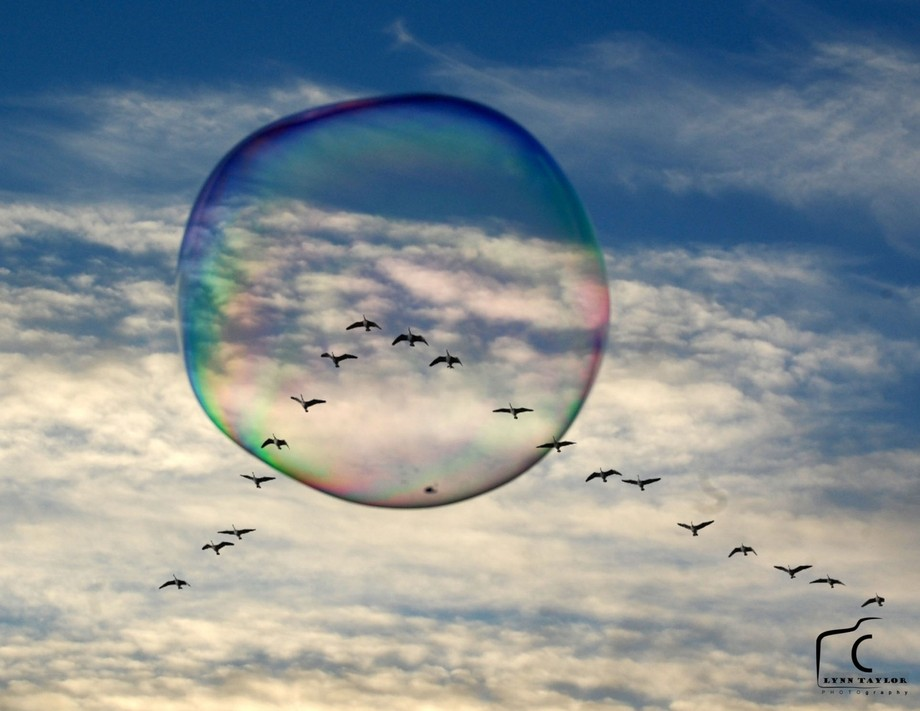 Bubble with birds