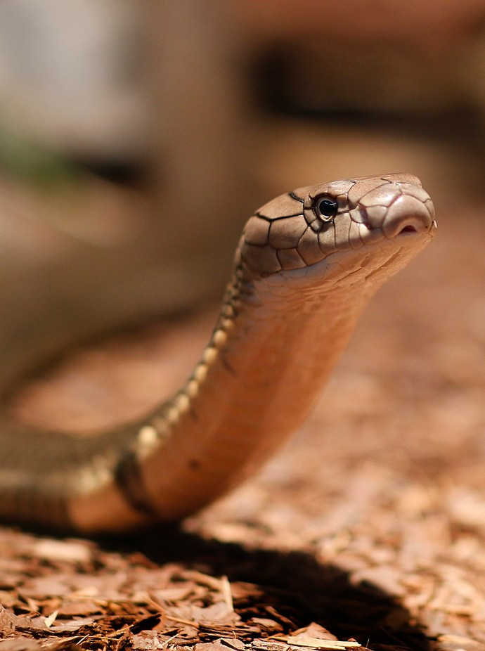 snake by FSP-Studios - Snakes Photo Contest