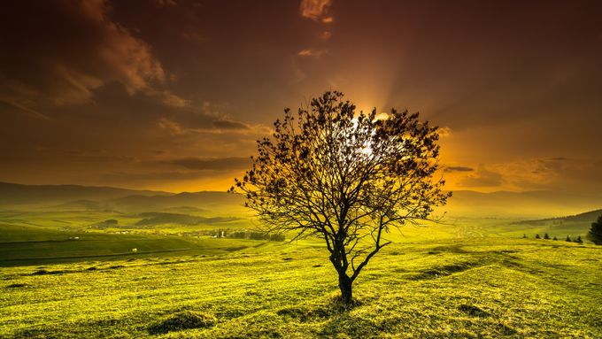warm silhouette... by Robert_Mikk - Silhouettes Of Trees Photo Contest