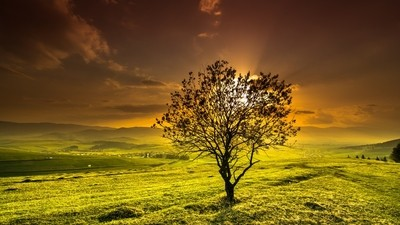 warm silhouette...