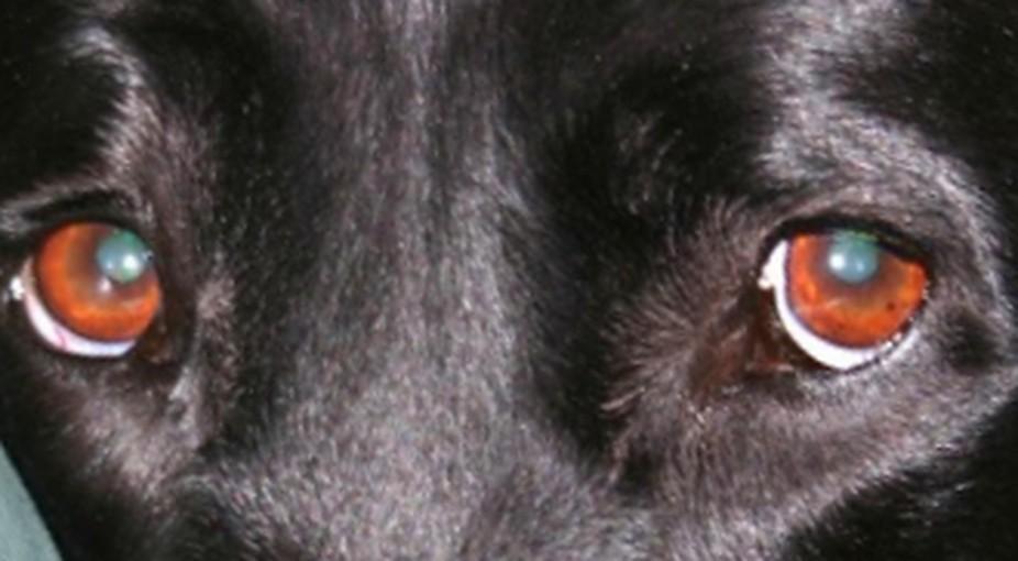 Reece eyes