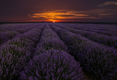 exciting landscape with lavender field at sunset