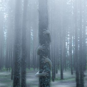 Mysterious forest with fog , what hides behind the tree?