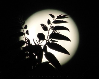 Solstice . Moon