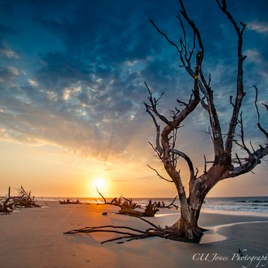 update....this tree was knocked over by Hurricane Matthew in 2016..  Boneyard beach on Bull's Island located in Awendaw, SC. (located outside of Mt. Pleasant, SC) This place always amazes me every time I go. You must get up really early to get a sunrise here. This requires you to get the ferry from Coastal Expeditions at 4am then a truck ride from the dock in the complete dark (3 miles) then you come to beach. All I can say is wow this place is amazing & glorious. I am very thankful to live close enough to visit often.