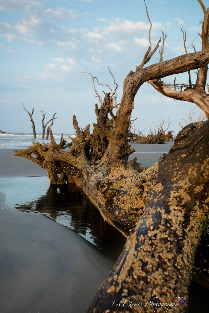 Boneyard beach on Bull's Island located in Awendaw, SC. (located outside of Mt. Pleasant, SC) This place always amazes me every time I go. You must get up really early to get a sunrise here. This requires you to get the ferry from Coastal Expeditions at 4am then a truck ride from the dock in the complete dark (3 miles) then you come to beach. All I can say is wow this place is amazing & glorious. I am very thankful to live close enough to visit often.