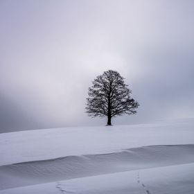 Cold and windy times. In the middle of a grey-blue winter day I saw this beautiful lonesome tree - standing alone. Black branches and a thick bla...