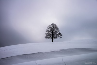 BLACK TREE ON A WHITE HILL