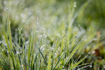 Early Morning Dew On Grass In Irish Medow, Background, Wallpaper