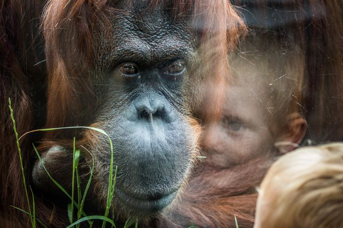 Encounters by fleos - Happening At The Zoo Photo Contest